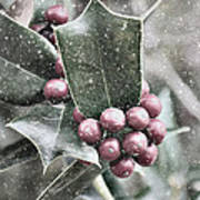 Snowy Holly Christmas Card Poster