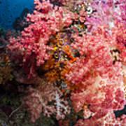 Soft Coral In Raja Ampat, Indonesia Poster
