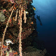 Soft Coral Reef, Indonesia Poster