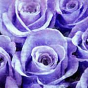 Soft Lavender Roses Poster