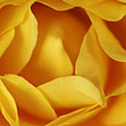 Softness In Yellows Poster
