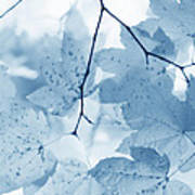 Softness Of Blue Leaves Poster by Jennie Marie Schell
