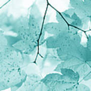 Softness Of Teal Maple Leaves Poster