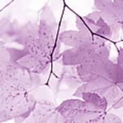 Softness Of Violet Maple Leaves Poster