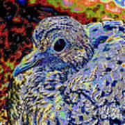 Solar Dove Poster by Tammy Ishmael - Eizman