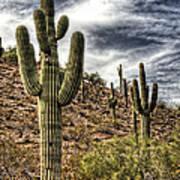 Sonoran Desert II Poster