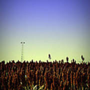 Sorghum Fields Forever Poster