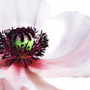 Soul Of Poppy Poster