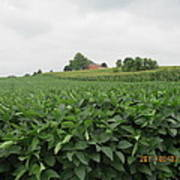 Soy Beans And Red Barn Poster