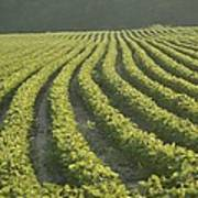 Soybean Crop Ready To Harvest Poster by Brian Gordon Green