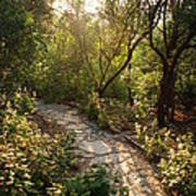 Sparkling Dawn On A Woodland Path Poster