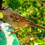 Sparrow In Morning Light  Poster