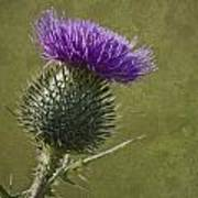 Spear Thistle With Texture Poster