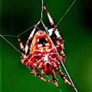 Spider Weaving Poster