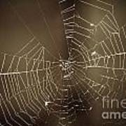 Spider Web 1.0 Poster