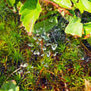 Spider Webs At The Farm Poster