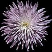 Spiky Flower Poster