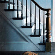 Spooked Cat By Stairs Poster