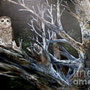 Spotted Owl In Tree Poster