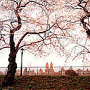 Spring Cherry Blossoms - Central Park Reservoir Poster by Vivienne Gucwa