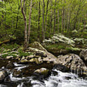 Spring Dogwoods On The Little River - D003829 Poster