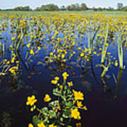 Spring Flood Plains With Wildflowers Poster