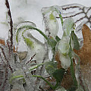 Spring Flowers In Ice Storm Poster