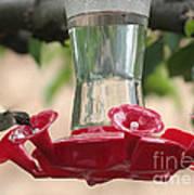 Spring Hummingbird At Feeder Poster