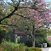 Spring In Bloom At The Japanese Garden Poster