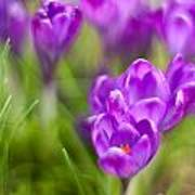 Spring In The Garden Poster