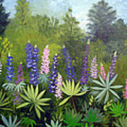 Spring Lupines Poster