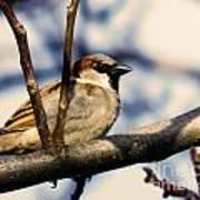 Spring Sparrow Set 1 Poster