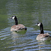 Spring Thaw Water Geese Poster