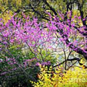 Spring Trees In San Antonio Poster