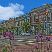 Spring Tulips Downtown Georgetown Poster