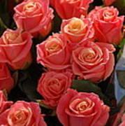 Springtime Roses Poster