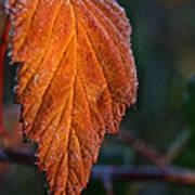 Sprinkled Frost Poster