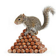 Squirrel And Nut Pyramid Poster by Mark Taylor