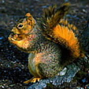Squirrel At Riverfront Park Poster