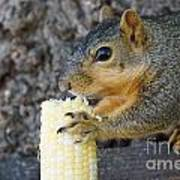 Squirrel Holding Corn Poster