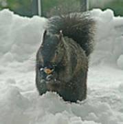Squirrel In The Snow Poster
