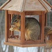 Squirrel Sneaking Food Poster
