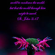 St. John 3  17  And Bee Balm Poster