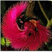 St Kitts Flora Poster