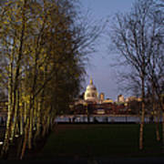 St Paul's With Silver Birches Poster