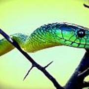 Staring Snake Poster