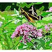 Stencilled Butterfly Poster