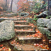 Steps Cloudland Canyon Poster