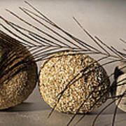 stone fish - A a peacock feather and four pebbles become a sea creature in artist mind Poster