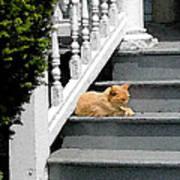 Stratford Cat Nap Poster